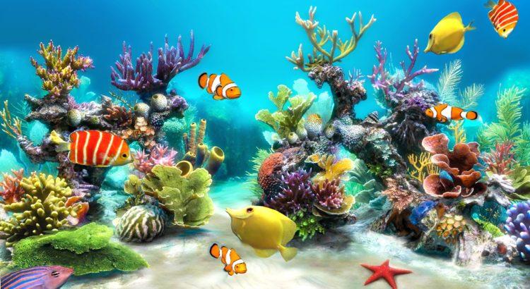 sim-aquarium-live-wallpaper-f329d3-h900